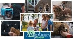 PremierPups com Reveals Valuable Insights About the Premier